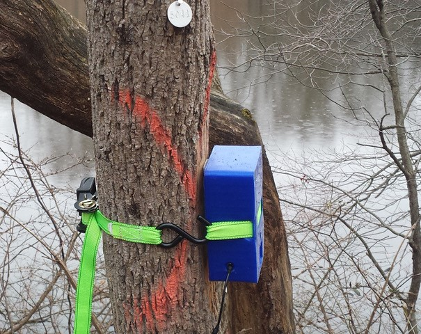 Sensor device strapped to a tree