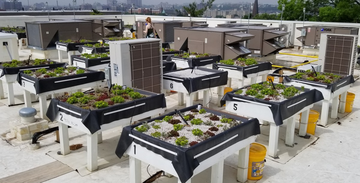 Green roof flourishing