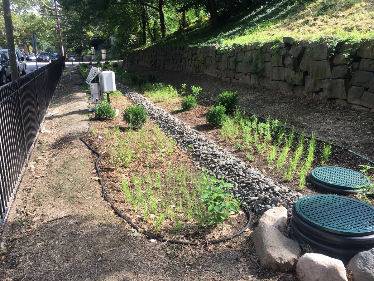 Newly planted eighth street and Hudson rain garden