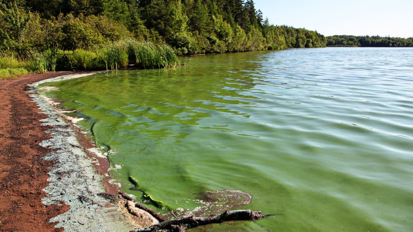 Lake covered with green algae