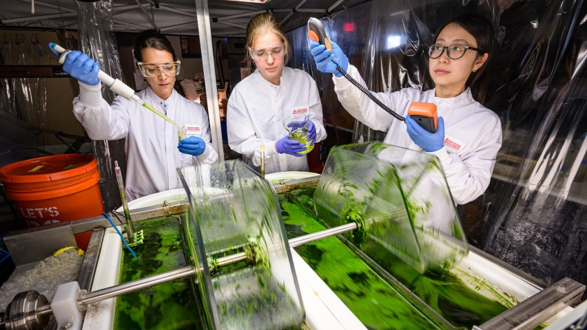 Image of three researchers conducting experiments on two tubs of algae