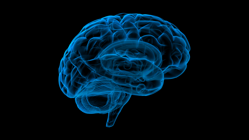 3D drawing of brain