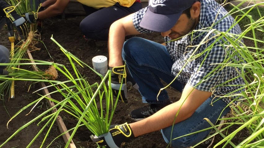 Stevens student researchers plant vetiver grass around Jersey City houses