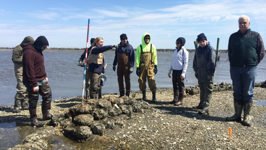 Students build oyster castles