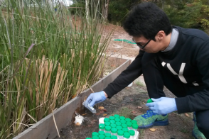 an environmental engineering student taking soil samples